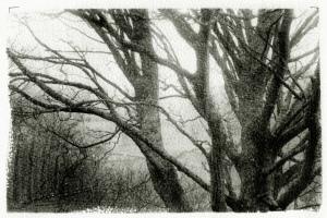 Ivelet Wood