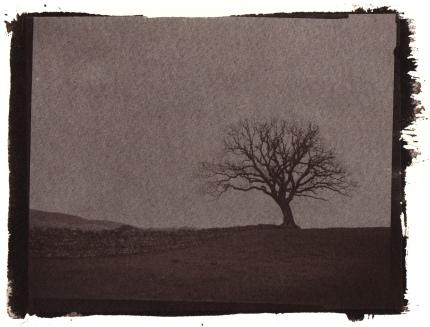 Oak tree Salt