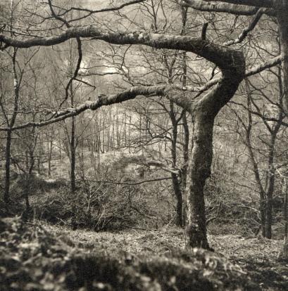 Woden Tree