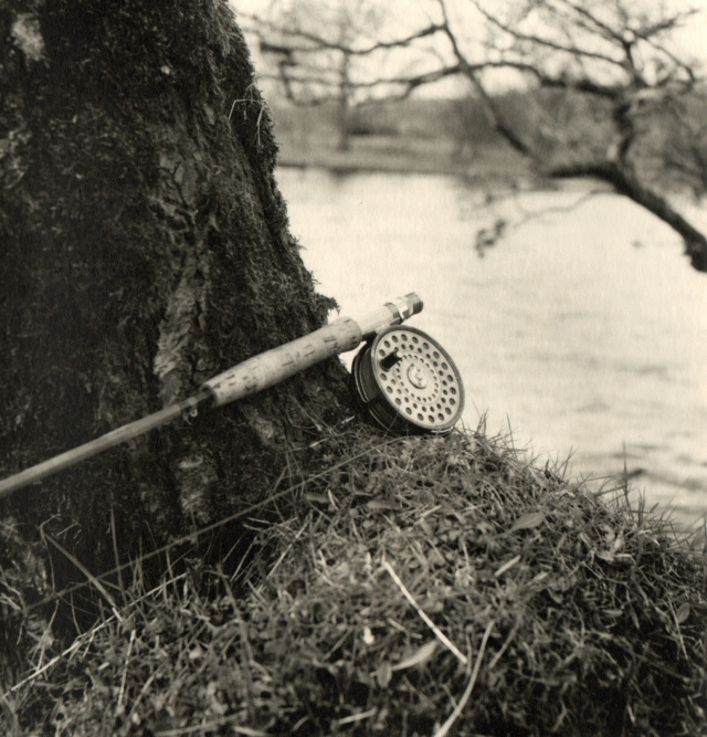 Reel and Tree