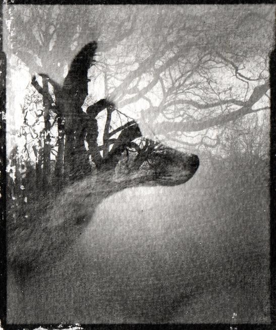 Fox Wood Blog